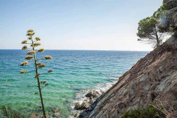 Küste am Mittelmeer nahe Saint Tropez mit Pinien