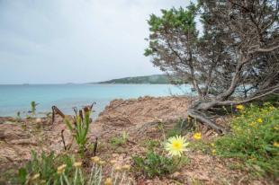 Bucht mit Felsen und blühenden Pflanzen auf Sardinien