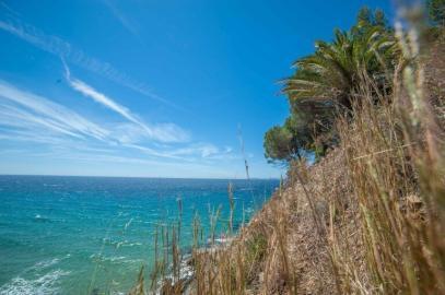 Nähe Saint Tropez - Felsenküste, türkises Wasser und Palmen
