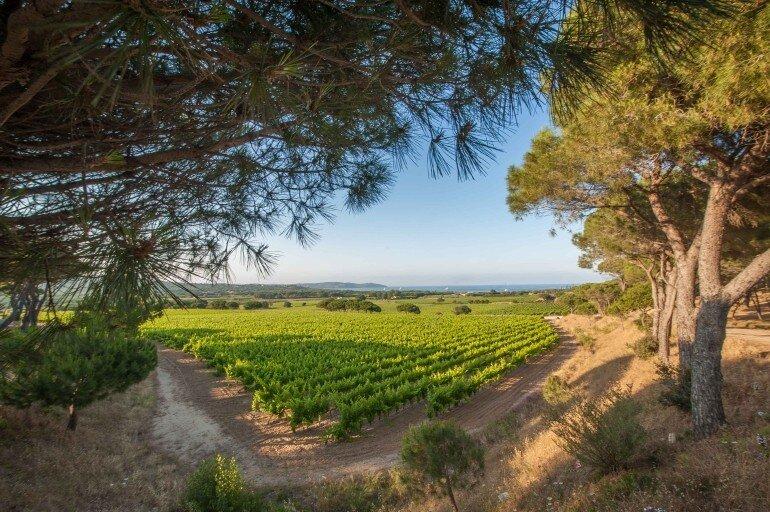 Camping Les Tournels - Blick über die Weinberge auf Ramatuelle