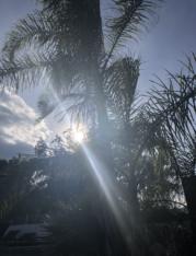 Palme mit durchscheinender Sonne auf Korsika