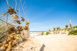 MYSMALLHOUSE.de Surfen und Camping Campingplatz Wohnwagen Zelten Le Saint Martin Atlantik Baden Dünen Surfkurs Sommer Strand Urlaub Stellplatz Strandzugang Meer