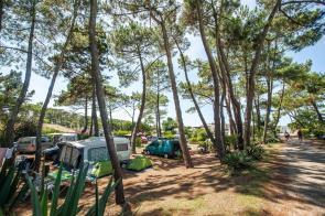 Surfen und Camping Campingplatz Wohnwagen Zelten Le Saint Martin Atlantik Baden Dünen Surfkurs Sommer Strand Urlaub Stellplatz Le Saint Martin