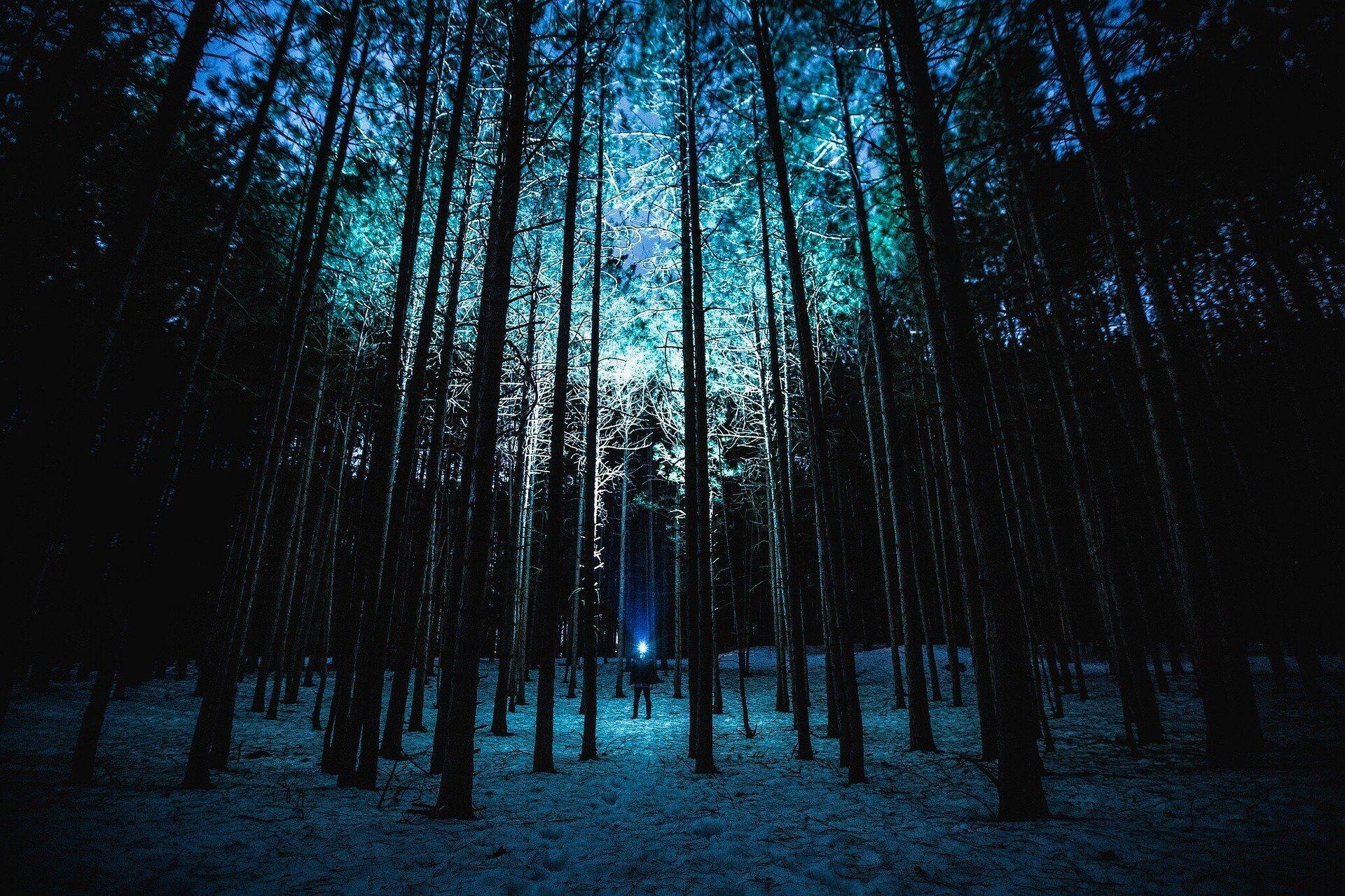 Person im Wald bei nacht mit hller LED Taschenlampe leuchtet Bäume an