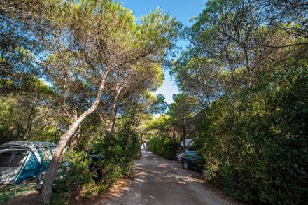 Weg zu Caravan Stellplätzen unter Bäuemen im Schatten mit Zelten und Wohnmobil - Camping in Apulien