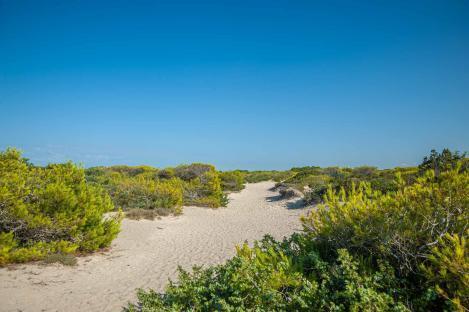 Dünen mit grüner Vegetation am Strand Riva di Ugento - Camping in Apulien