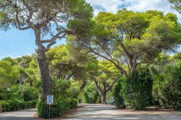 große Kiefern und viele Büsche am Eingang Rezeption des Campingplatzes Riva di Ugento - Camping in Apulien