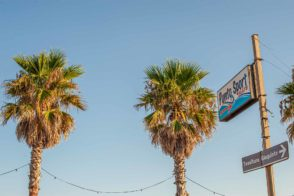 Palmen am Meer vor Himmel - Camping in Apulien