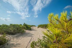 Weg über die Düne mit Kiefer Strauch - Camping in Apulien