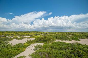 grün bewachsene Dünen Landschaft am Meer - Camping in Apulien