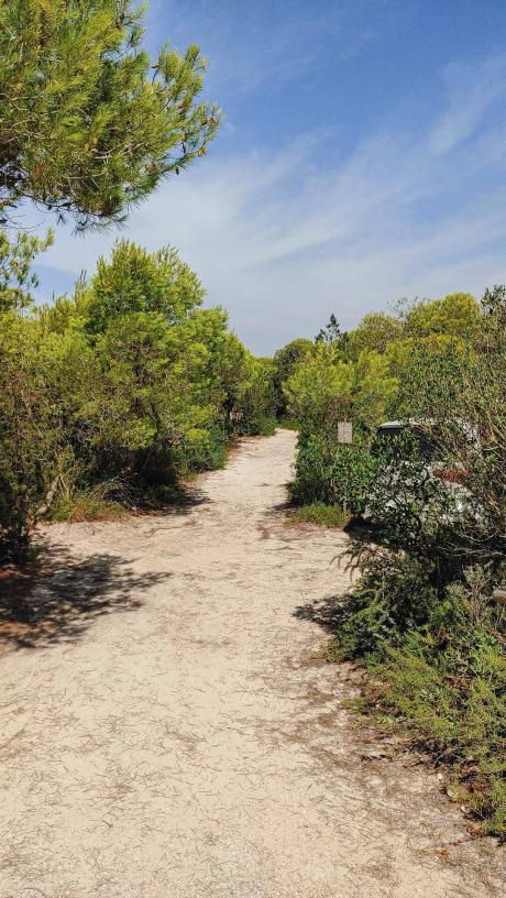Weg zum Strand mit Kiefern Riva di Ugento - Camping in Apulien