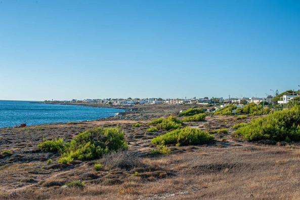 Küstenstreifen in Ugento mit Gras und Pflanzen - Hinterland von Salento