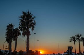 Sonnenuntergang vor Palmen in Gallipoli - Hinterland von Salento